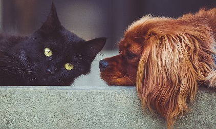 A cat and dog being friends