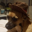 Coco in cowboy hat front page thumb