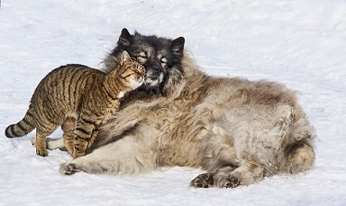 A cat and dog snuggling in the snow