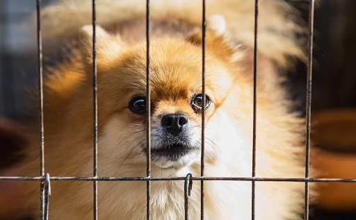 A small dog peeps through the wire on a kennel