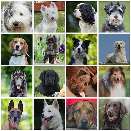 A collage of 16 dogs