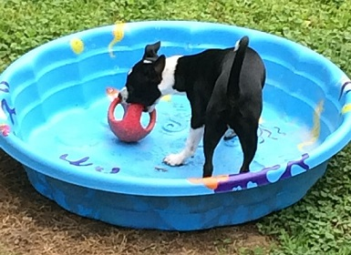 Dylan plays with his favorite ball in his swimming pool when it has no water.