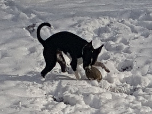 Dylan in the snow with his football