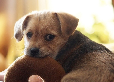 Sweet puppy with a chew toy