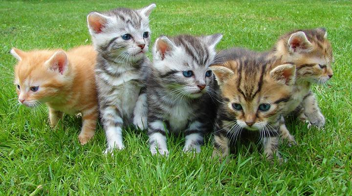 Five kittens in the grass